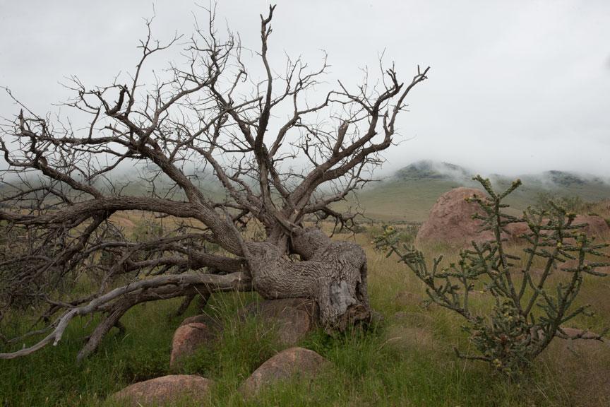 Dead Tree & Fog — no alteration at all