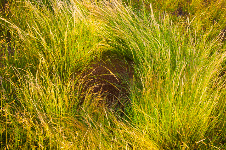 Grass Swirl  (heavily saturated)