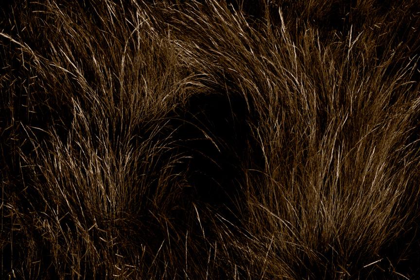 Grass Swirl